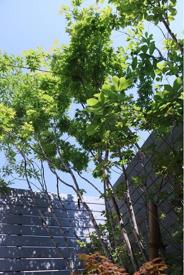 RCギャラリー西宮中庭の木々たち