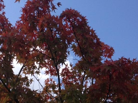 「RCギャラリー西宮」の近所の公園では早くも紅葉が始まっています