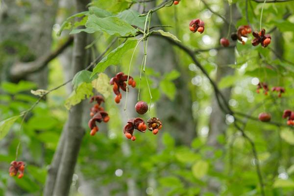 無料写真素材「花ざかりの森」より