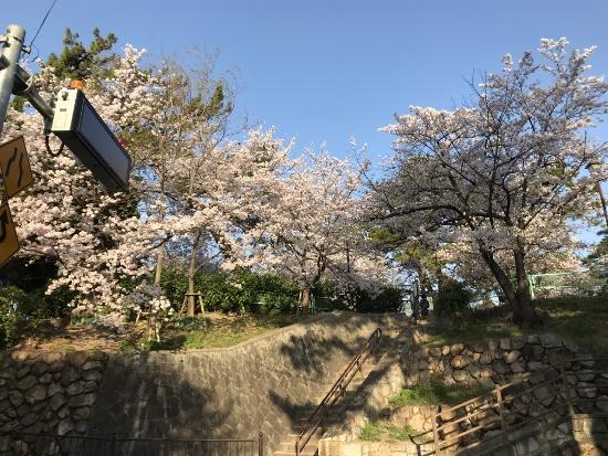 2018.3.30夙川桜①