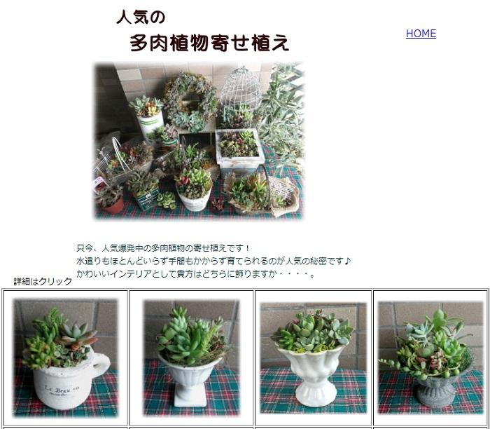 アトリエMIYO多肉植物のページ