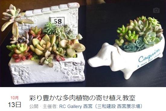 彩り豊かな多肉植物の寄せ植え教室