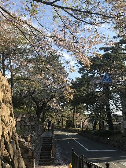 夙川駅周辺の桜も見納め