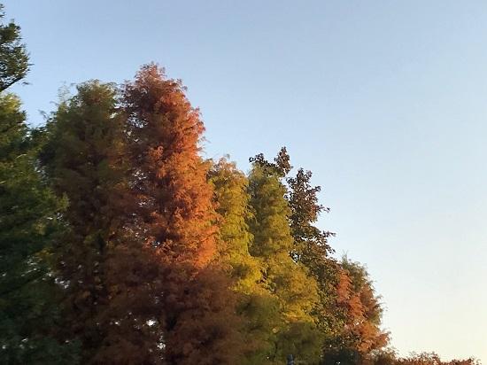 2019年11月公園の紅葉