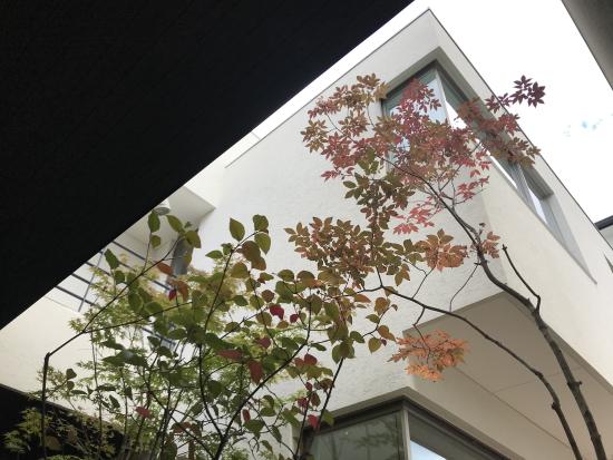 2020.11月RCギャラリー西宮中庭の紅葉